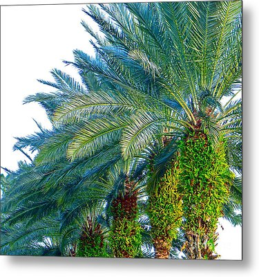 Metal Print featuring the photograph Progression Of Palms by Joy Hardee