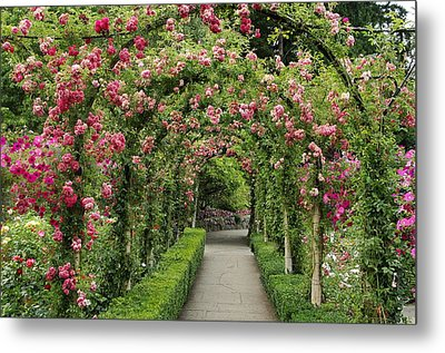 Metal Print featuring the photograph Rose Promenade   by Natalie Ortiz