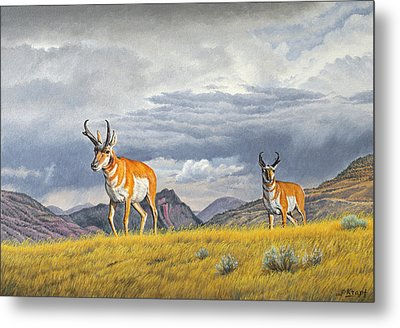 Pronghorn-coming Over The Rise Metal Print by Paul Krapf