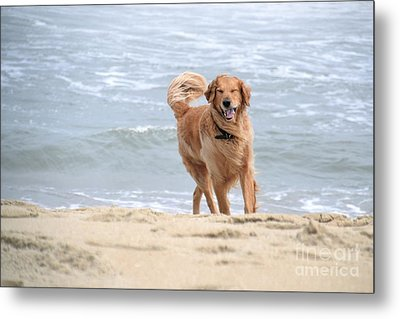Proof That Dogs Smile Metal Print