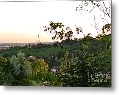Prosecco Vineyards Metal Print by Sarah Christian