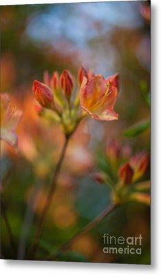 Proud Orange Blossoms Metal Print by Mike Reid