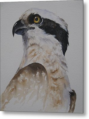 Proud Osprey Metal Print by Mary McCullah
