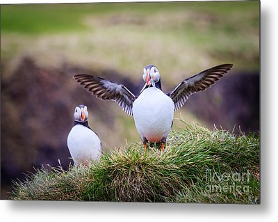 Proud Puffin Metal Print