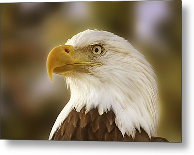 Metal Print featuring the photograph Proud Symbol Of A Nation  by Brian Cross