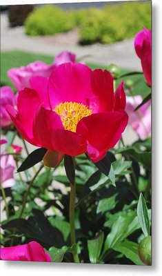 Proud To Be Pink Metal Print by Billie Colson