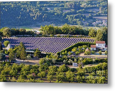 Provence Farmland Metal Print by Bob Phillips