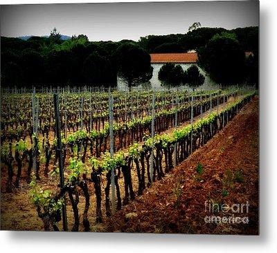 Provence Vineyard Metal Print by Lainie Wrightson