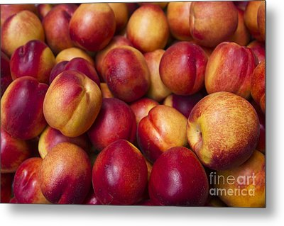 Metal Print featuring the photograph Prunus Domestica by Mohamed Elkhamisy