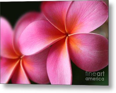 Pua Lei Aloha Cherished Blossom Pink Tropical Plumeria Hina Ma Lai Lena O Hawaii Metal Print by Sharon Mau