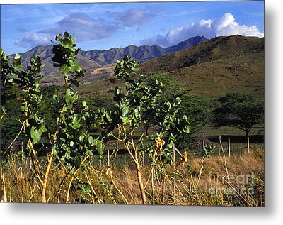 Puerto Rico Cayey Mountains Near Salinas Metal Print by Thomas R Fletcher