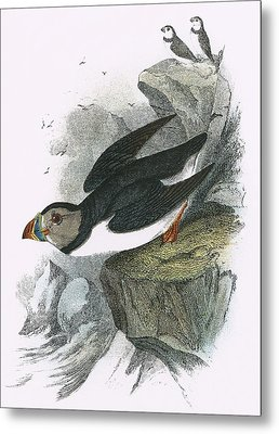 Puffin Metal Print by English School