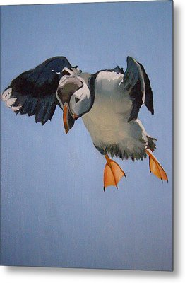 Puffin Landing Metal Print by Eric Burgess-Ray