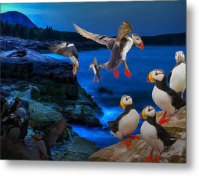 Puffins Bedding Down Metal Print