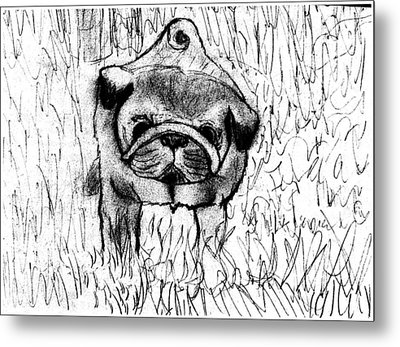 Pug In The Grass Metal Print by Shaunna Juuti