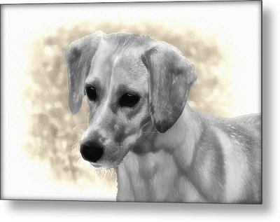 Puggles Metal Print by Bill Cannon