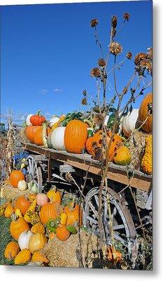 Metal Print featuring the photograph Pumpkin Farm by Minnie Lippiatt