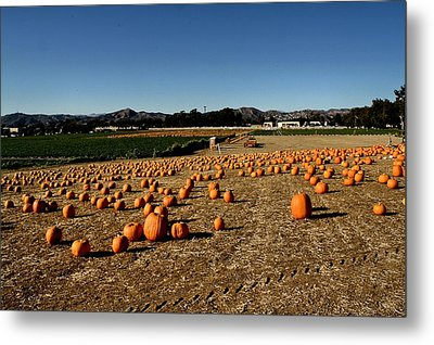 Metal Print featuring the photograph Pumpkin Field by Michael Gordon