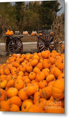 Pumpkin Harvest Metal Print by Brenda Giasson