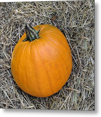 Pumpkin In The Hay Metal Print by Patricia E Sundik