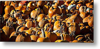 Metal Print featuring the photograph Pumpkin Patch  by Aaron Berg