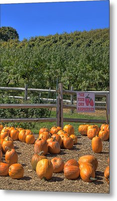 Pumpkins On The Farm Metal Print by Joann Vitali