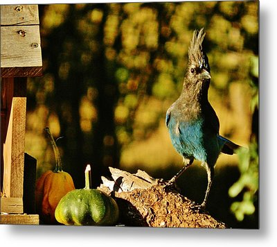 Punked-out Jay Metal Print by VLee Watson