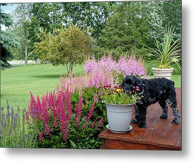 Metal Print featuring the photograph Pup And Flowers by Elaine Franklin