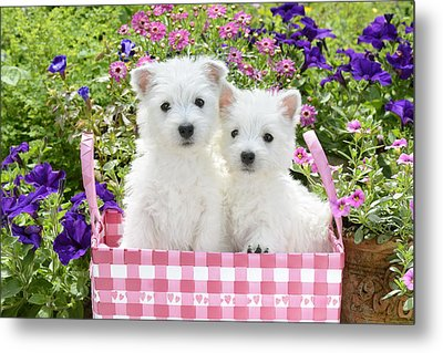 Puppies In A Pink Basket Metal Print by Greg Cuddiford