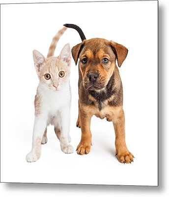 Puppy And Kitten Standing Together Metal Print by Susan Schmitz