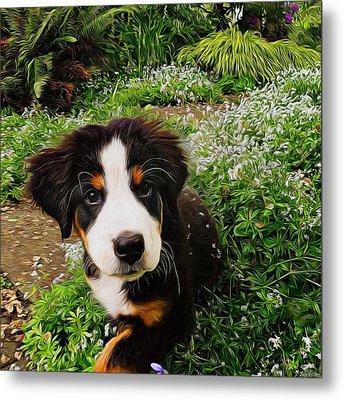 Puppy Art - Little Lily Metal Print by Jordan Blackstone