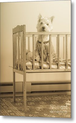Puppy Dog In A Baby Crib Metal Print