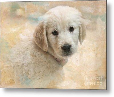 Puppy Eyes Metal Print by Jayne Carney
