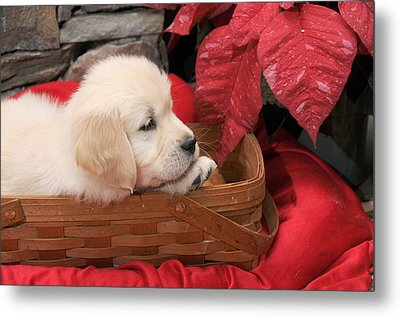 Metal Print featuring the photograph Puppy In A Basket by Paul Miller