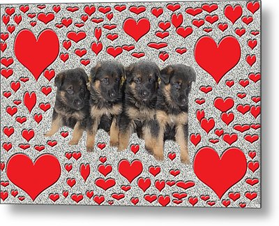 Puppy Love Metal Print by Aimee L Maher Photography and Art Visit ALMGallerydotcom