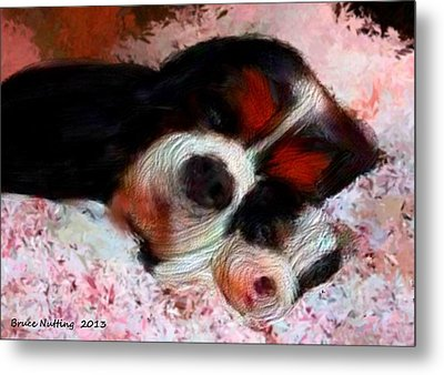 Puppy Love Metal Print by Bruce Nutting