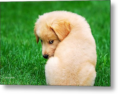 Puppy Love Metal Print by Christina Rollo