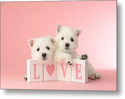 Puppy Love Metal Print by Greg Cuddiford