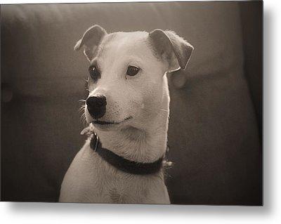Puppy Portrait Metal Print by Carolyn Ricks
