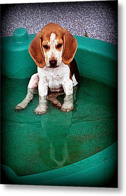 Puppy Refection  Metal Print by Lynn Griffin