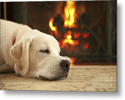 Puppy Sleeping By The Fireplace Metal Print