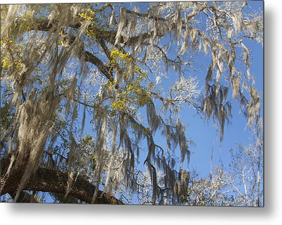 Pure Florida - Spanish Moss Metal Print by Christine Till