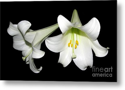 Metal Print featuring the photograph Pure White Easter Lilies by Rose Santuci-Sofranko