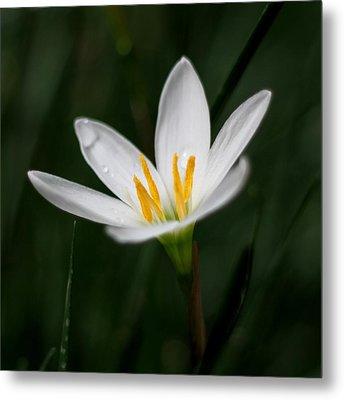 Pure White - Lily Metal Print