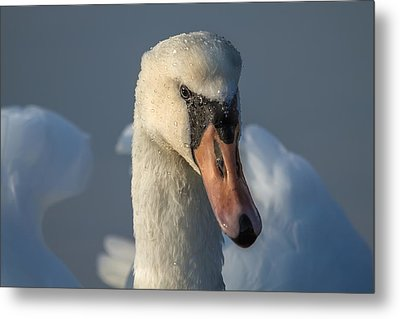 Metal Print featuring the photograph Purity In The Eyes by Rose-Maries Pictures