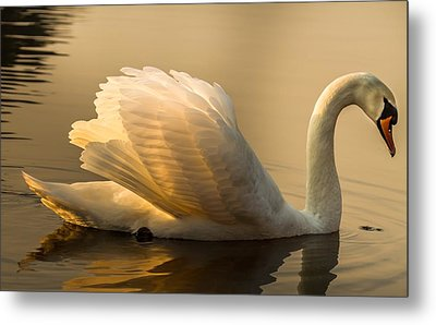 Purity Of The Soul Metal Print by Rose-Maries Pictures