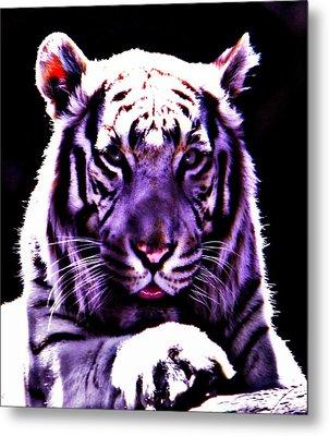 Purle Tiger Metal Print by Amanda Eberly-Kudamik
