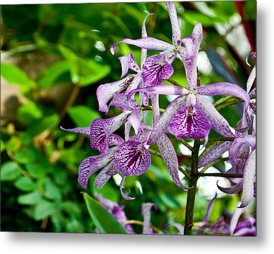 Purple And Green Pla 501 Metal Print