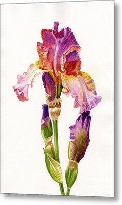 Purple And Orange Iris Metal Print by Sharon Freeman