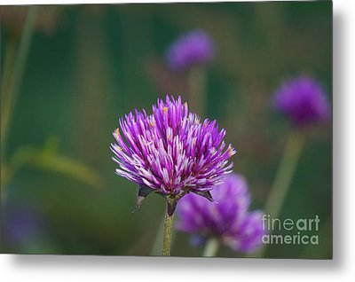 Purple And White In Harmony Metal Print